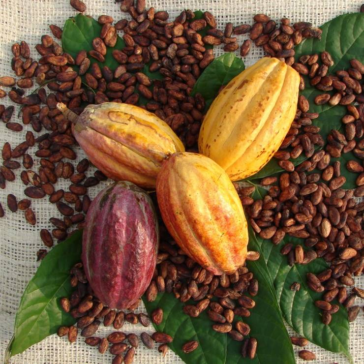 UTZ, sustainable cocoa